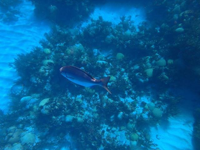 Bermuda fish