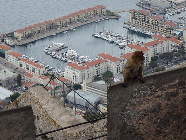 roaside on the rock of Gibraltar