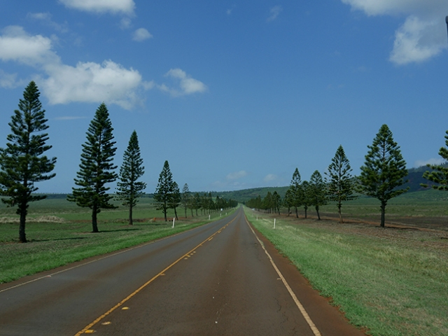 lonely road on Lanai