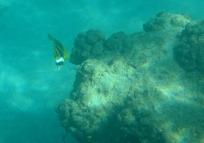 fish in Lanai
