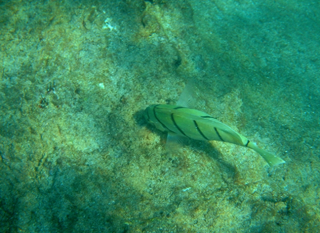 fish in Hawaii