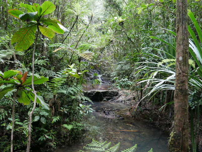 forest park in Fiji