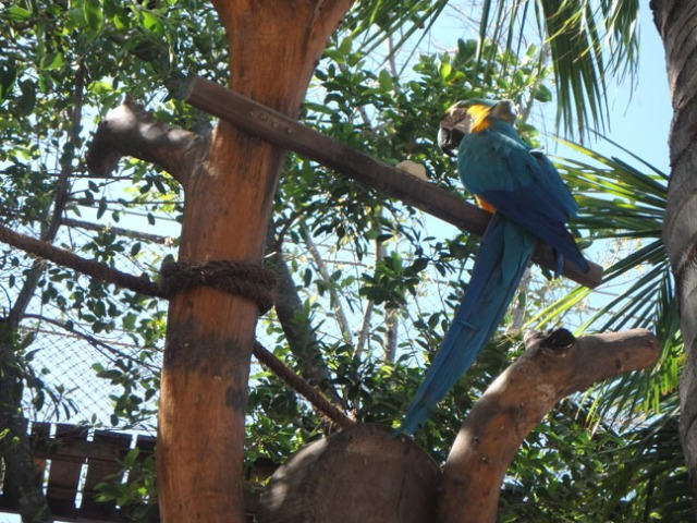 bird at costa maya