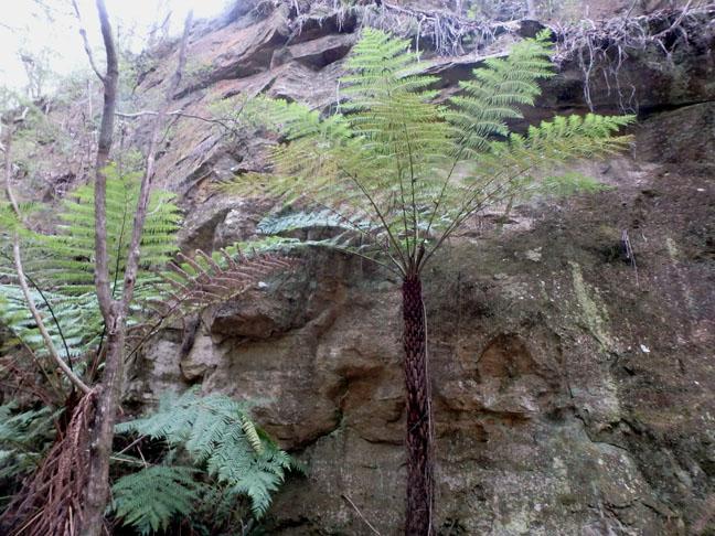 jurassic tree