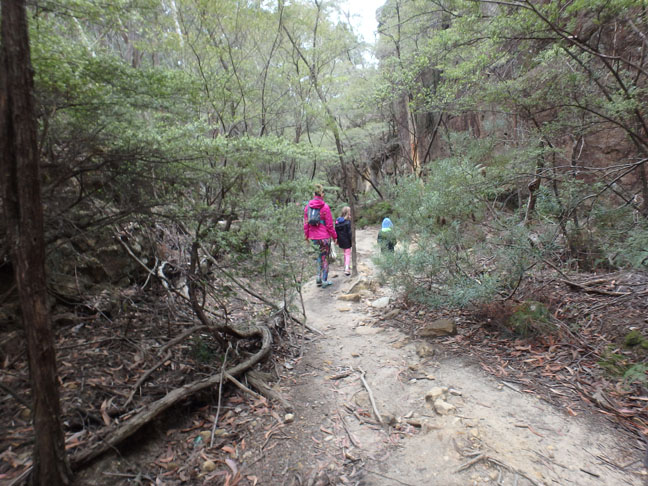 trail to glow worm tunnel