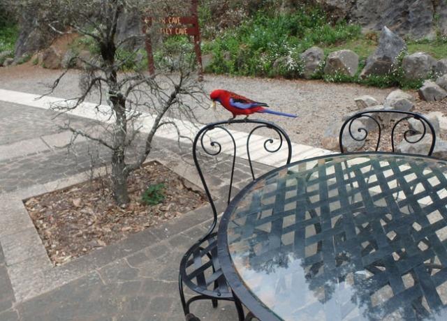 bird in Australia