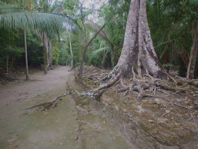 jungle trail to Mayan ruins