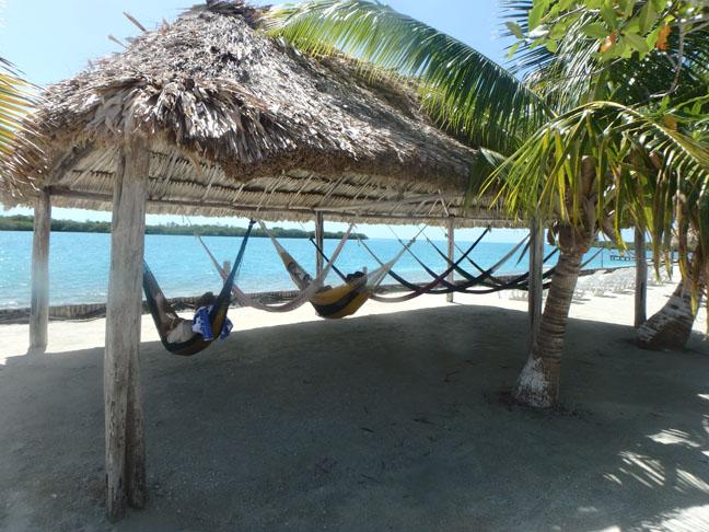 Starfish Island hammocks