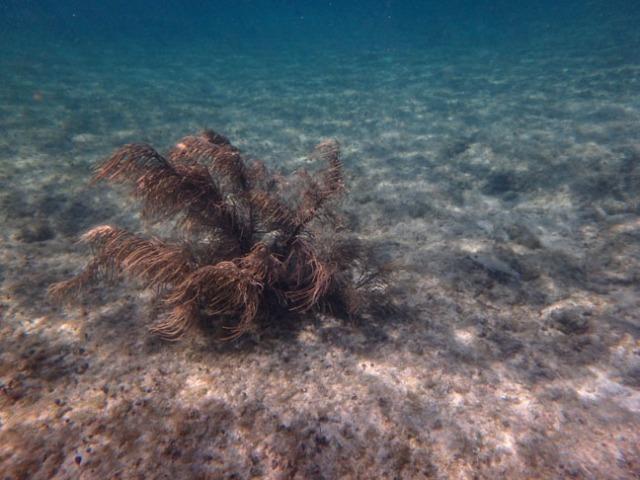 undersea photo