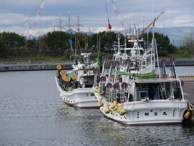 squid fishing boats