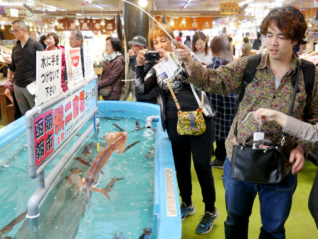 squid tank at Hakodate morning market