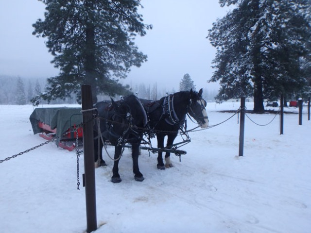 sleigh waiting for riders
