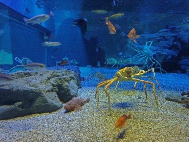 crab in Osaka Aquarium