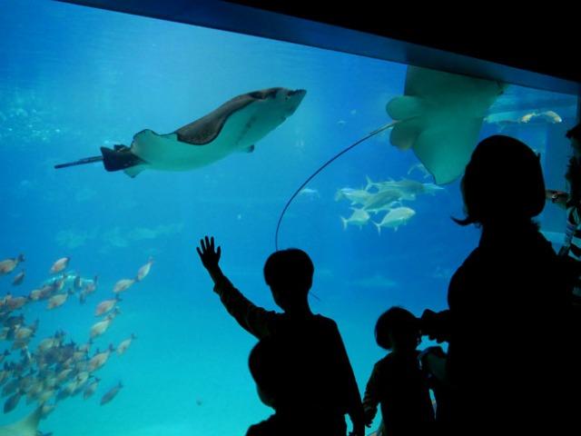 pacific ocean exhibit in Osaka