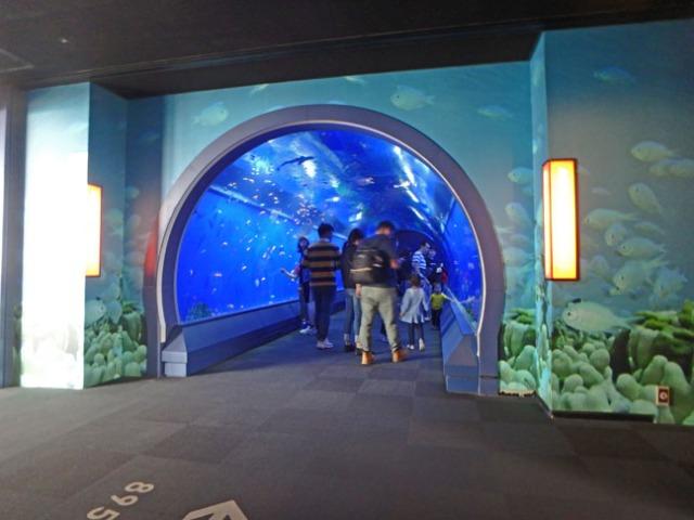 fish tunnel at Osaka aquarium