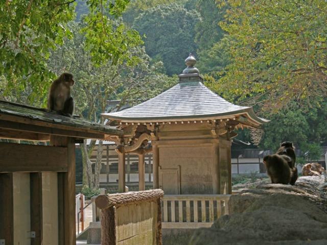 Beppu monkey park