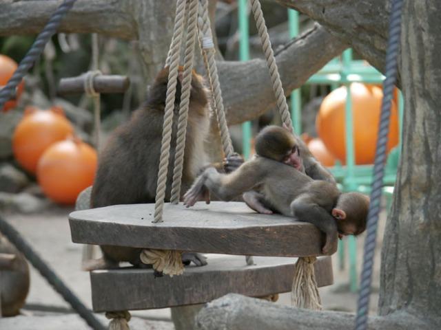 monkey playground