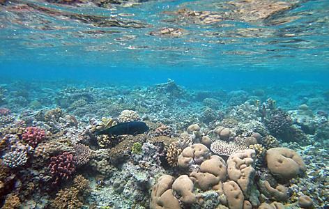 Mystery Island snorkeling
